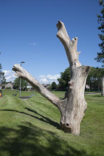 Natural climbing logs
